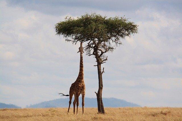 séjour afrique