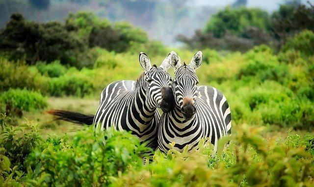 séjour continent africain